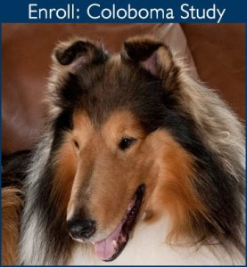 Enroll in the Coloboma Study - clicks to contact form request